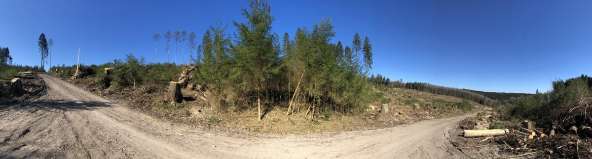 Fichtenwald oder das was übrig ist